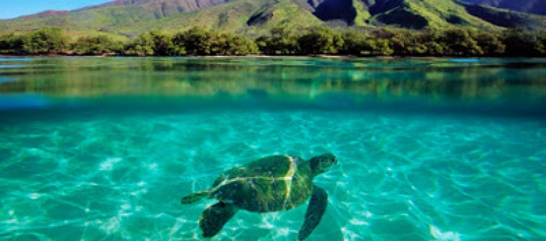 2 Hours Online per Weekend Could Be Your Trip to Maui